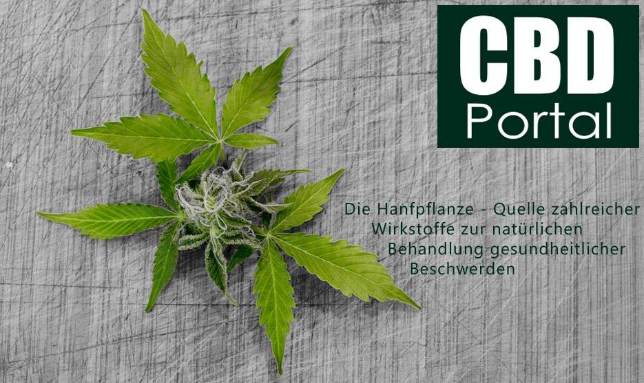 Die Hanfpflanze - Quelle zahlreicher Wirkstoffe zur natürlichen Behandlung gesundheitlicher Beschwerden
